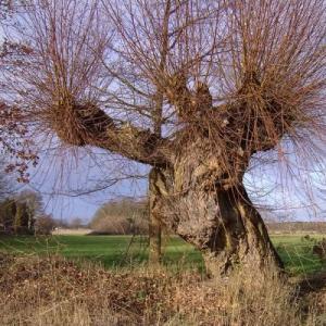 Probleme-der- anderen Baum